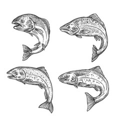 Fish sketch salmon and trout fishing catch vector