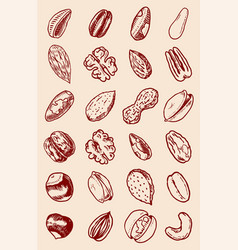 Nuts mix background seeds and granule corn vector