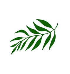 summer palm leaf vector image