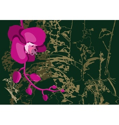 Orchid Flower on a Dark Background vector image vector image