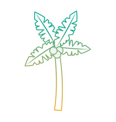 tropical palm tree coconut natural vector image vector image