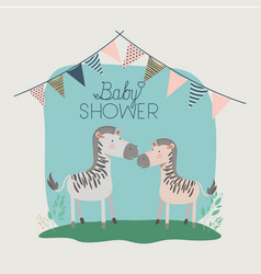 baby shower card with cute zebras couple vector image
