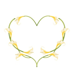Beautiful Yellow Anthurium Flowers in Heart Shape vector image