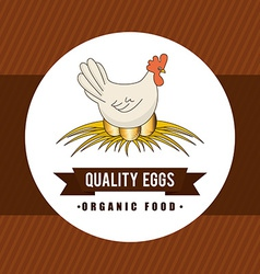 Eggs design vector