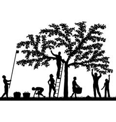 Fruit harvest vector