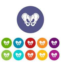 Pelvis set icons vector