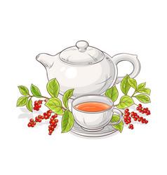 Schisandra tea in teapot vector