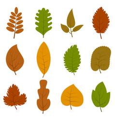 set of twelve different autumn leaves vector image