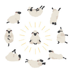 Sheep yoga poses collection farm animals set flat vector