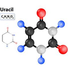 Uracil molecule vector image