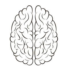 brain sign icon gyrus right and left brain vector image