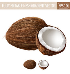 Coconut on white background vector