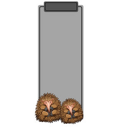 Echidna on grey border vector