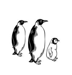 penguin outline icons vector image