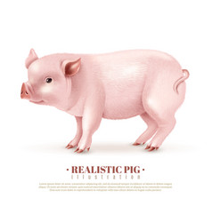 realistic pig vector image