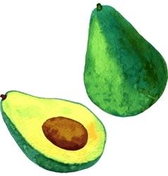 watercolor fruit avocado vector image