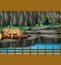 Scene with tiger in zoo vector