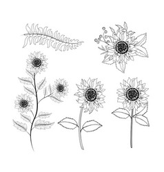 Set sunflowers plants with branches leaves vector
