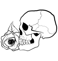 Skull with Rose vector