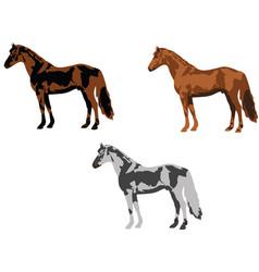 Three horses different domestic horse color vector