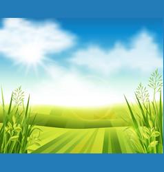 green farm field vector image vector image