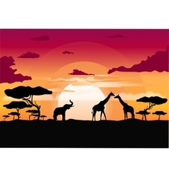 African sunset in the savannah vector image