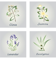 Collection of Herbs Labels for Essential Oils vector
