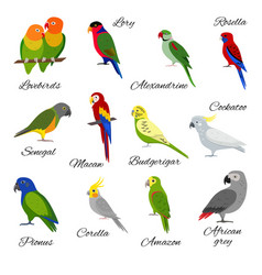 Colorful set parrot icons vector