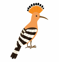 hoopoe bird isolated on white vector image