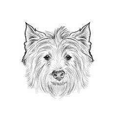 Sketch west highland white terrier Hand drawn vector