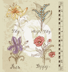 graphic set with flowers vector image vector image