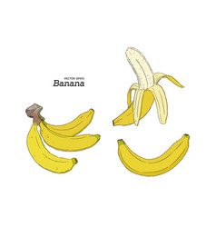 set of banana hand draw sketch vector image