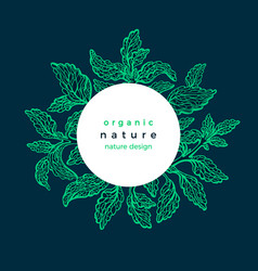 Stevia frame card fresh green plant vector
