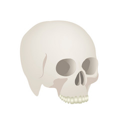 Side view realistic human skull icon vector