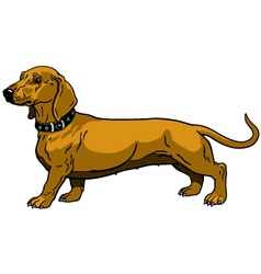 brown dachshund vector image vector image