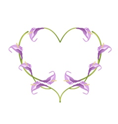 Beautiful Violet Anthurium Flowers in Heart Shape vector image