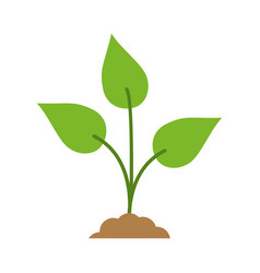 green plant icon image vector image