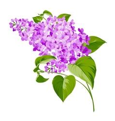 Spring siringa flowers background vector