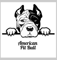 American pitbull - peeking dogs - breed face head vector