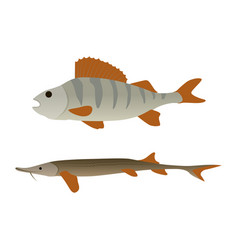 fish aquatic marine animals vector image