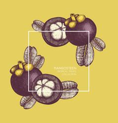 Purple mangosteen fruit vector