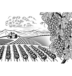 Vineyard valley landscape black and white vector