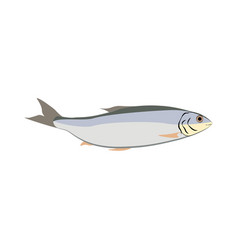 Herring fish nature healthy food vector
