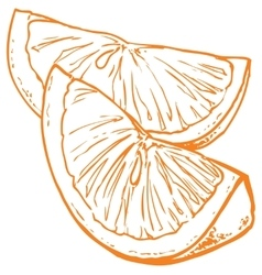 monochrome orange slices vector image