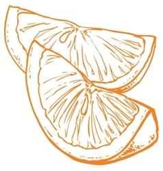 Monochrome orange slices vector