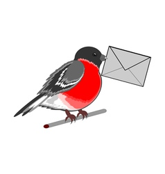 A funny bullfinch with a letter vector image