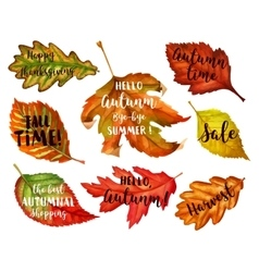 Autumn typographic Fall leaf vector