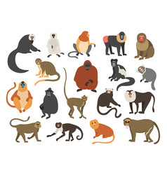 Cartoon monkeys exotic tropical animals vector