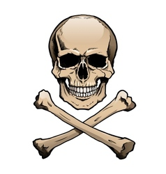 Colored human skull and crossbones vector