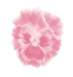 Pink viola vector